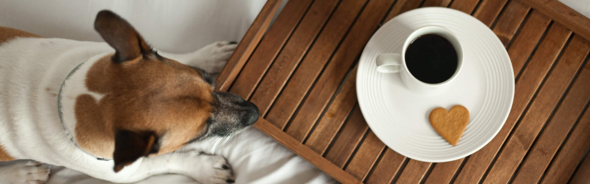 Picture of: Pet Friendly Hotel In San Francisco Bei San Francisco